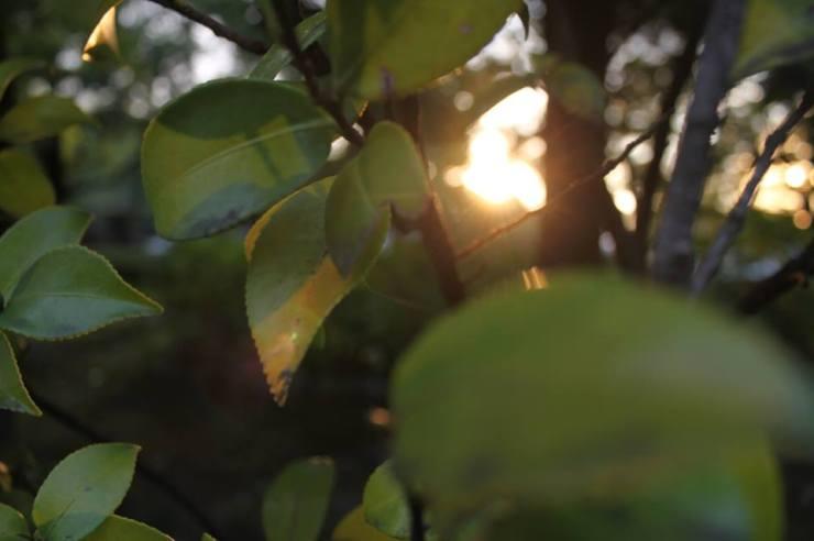Leaves near sunset